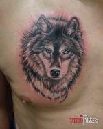 Тату волк на груди